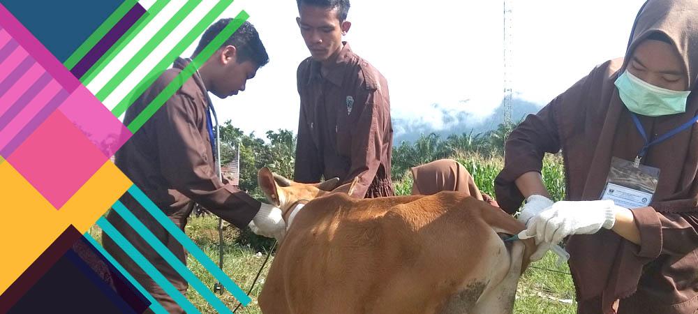 Agribisnis Ternak Ruminansia (ATR)